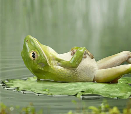 frog relaxing in pond